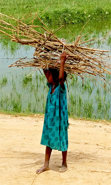 A village carrying firewood for her family.
